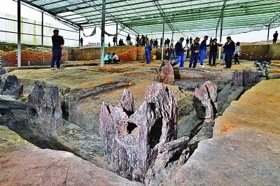4700年前完整木结构建筑基础出土